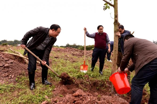 区领导义务植树 为建设山清水秀美丽江津再添新绿3.jpg
