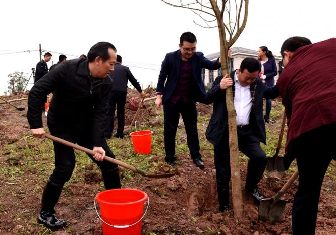 区领导义务植树 为建设山清水秀美丽江津再添新绿5.jpg